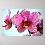 Orquídeas rosadas impresiones