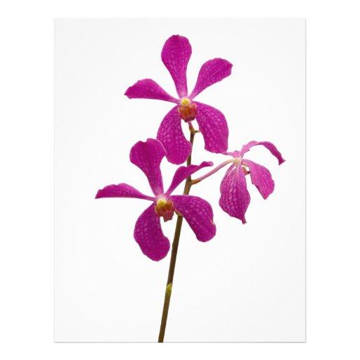 Orquídeas rosadas membrete personalizado