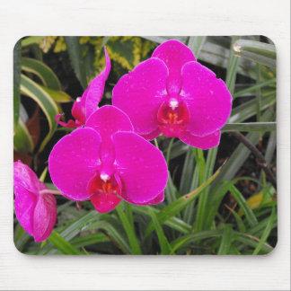 Orquídeas rosadas oscuras tapetes de ratón