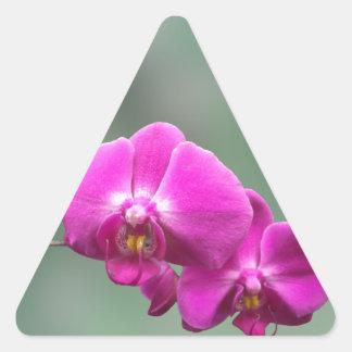 Orquídeas rosadas calcomanía de trianguladas