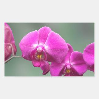 Orquídeas rosadas rectangular pegatinas