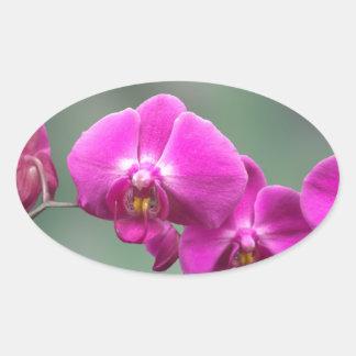 Orquídeas rosadas pegatinas óval personalizadas