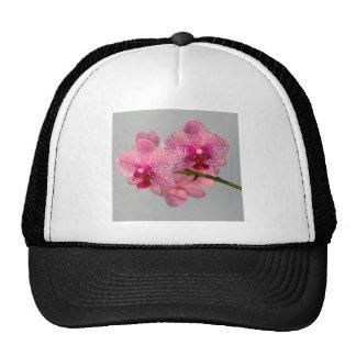 Orquídeas rosadas radiantees gorros