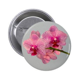 Orquídeas rosadas radiantees pin