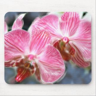 Orquídeas rosadas rayadas del Phalaenopsis Alfombrillas De Ratón