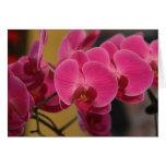 Orquídeas rosadas tarjeta de felicitación