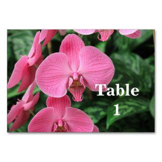 Orquídeas rosadas