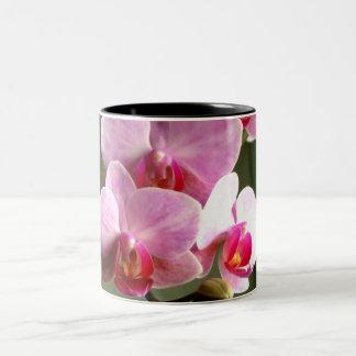 Orquídeas rosadas tazas