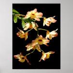 Orquídeas salvajes impresiones