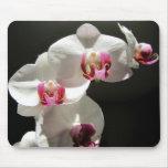 Orquídeas Tapete De Ratones