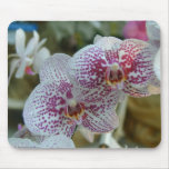 Orquídeas Tapetes De Raton