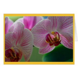 Orquídeas Felicitación