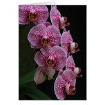 Orquídeas Tarjeta