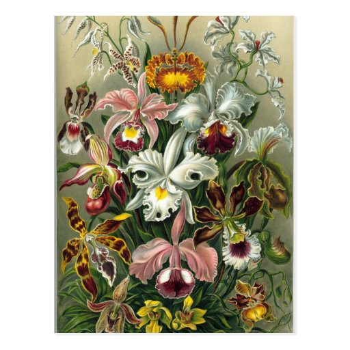 Orquídeas Tarjetas Postales