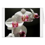 Orquídeas Tarjeton