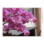 Orquídeas Tarjetón