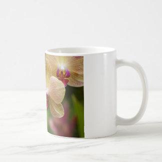 Orquídeas Taza De Café