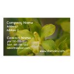 Orquídeas verdes bonitas plantillas de tarjeta de negocio