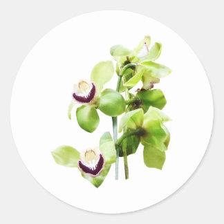 Orquídeas verdes del Cymbidium Etiqueta
