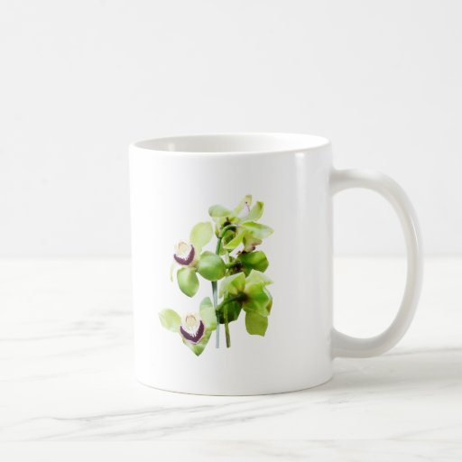 Orquídeas verdes del Cymbidium Taza De Café