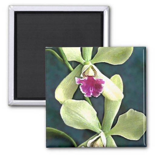 Orquídeas verdes y púrpuras de Cattleya Imán Cuadrado