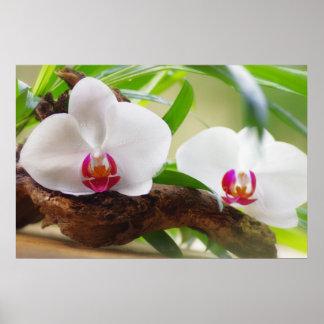 Orquídeas Wellness oasis Póster