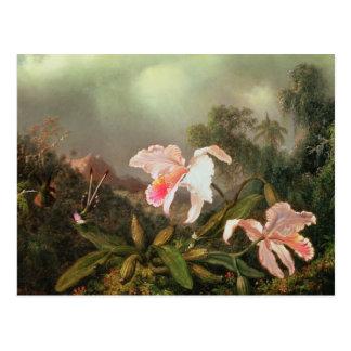 Orquídeas y colibríes, 1872 de la selva tarjeta postal