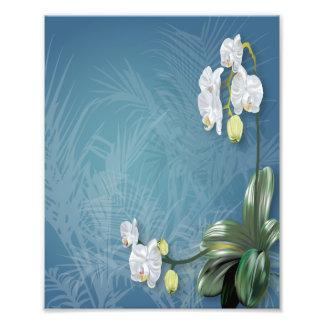 Orquídeas y helechos cojinete