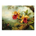 Orquídeas y postal de los colibríes