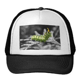 oruga del perejil blanco y negro gorras