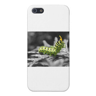 oruga del perejil blanco y negro iPhone 5 cárcasas