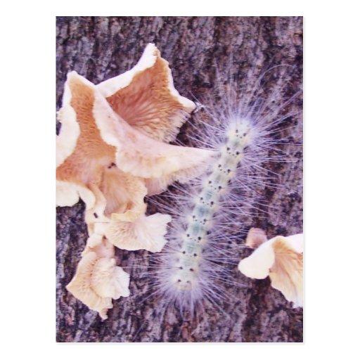 oruga y hongos borrosos tarjetas postales