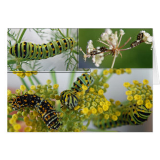Orugas de la mariposa del swallowtail del anís tarjeta de felicitación