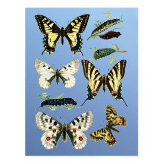 Orugas, mariposas y polillas de Swallowtail Postales