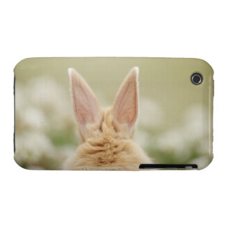Oryctolagus cuniculus 2 Case-Mate iPhone 3 case