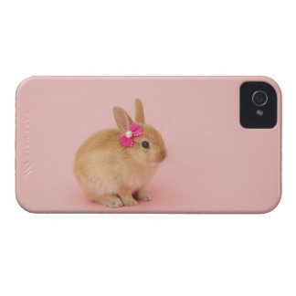 Oryctolagus cuniculus 2 iPhone 4 case