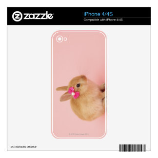 Oryctolagus cuniculus 2 iPhone 4 skins