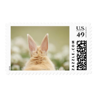 Oryctolagus cuniculus 2 stamps