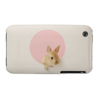 Oryctolagus cuniculus 3 iPhone 3 case