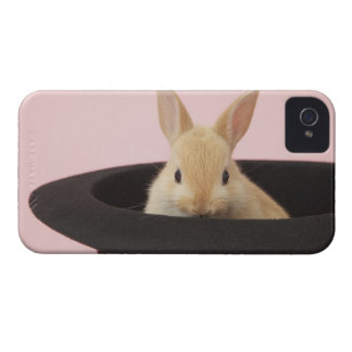 Oryctolagus cuniculus iPhone 4 Case-Mate cases