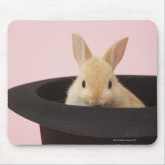 Oryctolagus cuniculus mouse pad