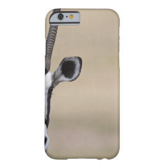 Oryx also called Gemsbock, Oryx gazella, Auob Barely There iPhone 6 Case