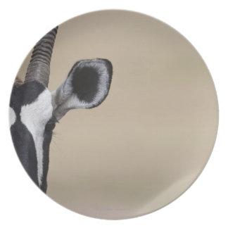 Oryx also called Gemsbock, Oryx gazella, Auob Melamine Plate