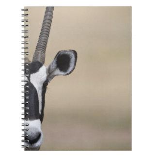 Oryx also called Gemsbock, Oryx gazella, Auob Note Book