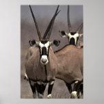 Oryx antelope print