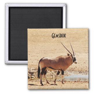 Oryx Gazella Kgalagadi Africa Refrigerator Magnet
