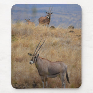 Oryx in Africa Mousepad