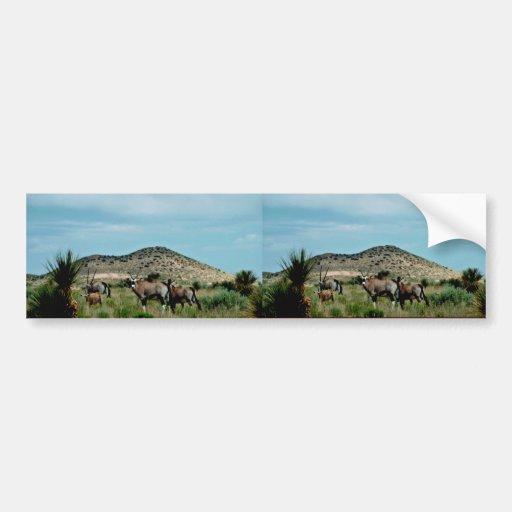 Oryx surafricano (Gemsbok) Etiqueta De Parachoque