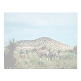 Oryx surafricano Gemsbok Invitación