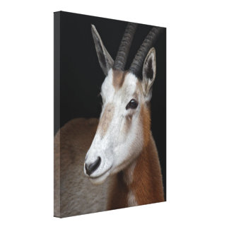 Oryx Wrapped Canvas Print